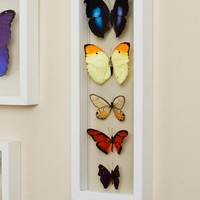 Five Butterflies in White Frame