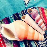 The Magic Conch (Caramel) - by ShellPipe (Free pipes with every order!) * Shell Pipe * Seashell Pipe * Smoking Pipe * Natural Pipe *