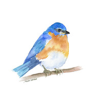 Eastern Bluebird Watercolor Painting - 8 x 10 - Giclee Print - 8.5 x 11
