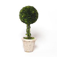 Preserved Boxwood Single Ball Topiary - 12 Inch