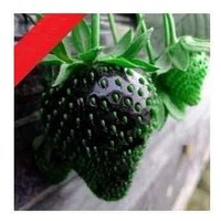 SD-0553 NEW Black STRAWBERRY, GIANT, wild, LARGEST FRUIT, EVERBEARING (40seeds)