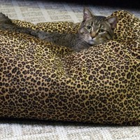 K&H Cuddle Cube Kitty Cat Bed, Small 18-Inch Round, Leopard