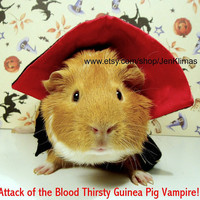Attack of the Blood Thirsty GUINEA PIG VAMPIRE
