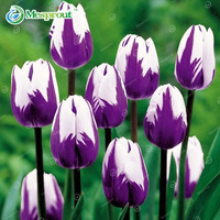 24Colors Perfume Tulip Seed High-grade Flower Bonsai Seeds 10PCS