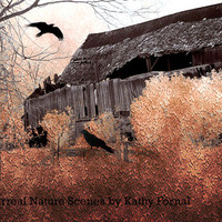 Nature Photography, Surreal Autumn Fall Nature, Fantasy Surreal Barn With Ravens Crows, Haunting Spooky Eerie Halloween Photography 8x12
