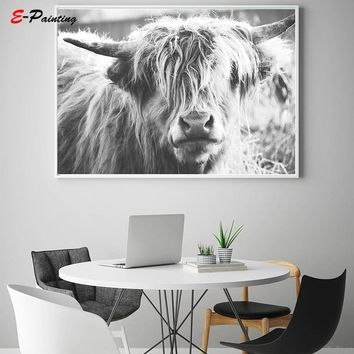 Highland Cow Print Wall Art Black and White Poster  Printable Wild Animal Bull Farm Photography Canvas Painting