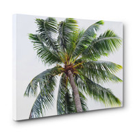 Caribbean Palm - Gallery Wrap Canvas, Surf Style Coconut Palm Tree, Tropical Green Wrapped Canvas Hanging. In 8x10 11x14 16x20 20x24 24x36