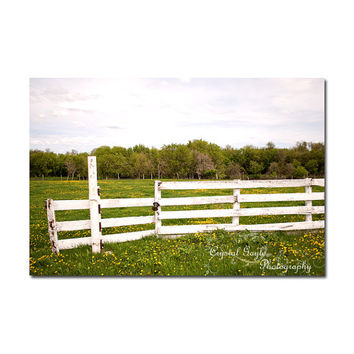 Fence Decor Wooden Fence Green Pastures Dandelions Farmyard Scenery