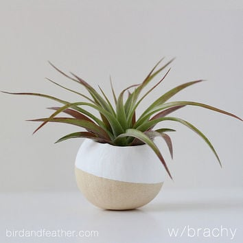 White Air Plant Pot with Air Plant