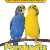 Parakeet Understanding and Caring for Your Pet
