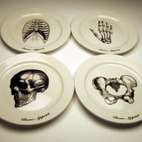 EveryDay with Rachael Ray BONE APPETIT 9 inch dinner plates