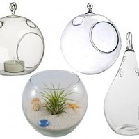 Collection of 4 Hand Blown Glass Terrariums - 30% off for a limited time