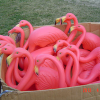 16 Lawn Pink Flamingos Don Featherstone Union Products