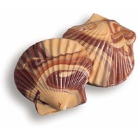 Milk Chocolate and Peanut Butter Swirled Sea Shells Candy: 64-Piece Bo