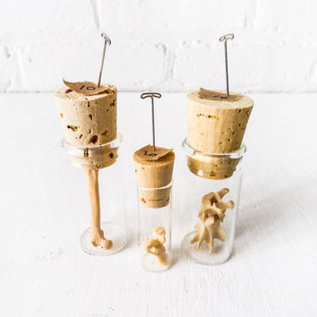 Set of 3 Raccoon Bones in Cork Vials - Taxidermy Collectibles - Glass Vial Cork Brown Paper Tag With Pin - Natural History Nature Item