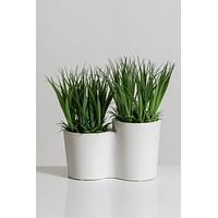 "10"" Grass in White Ceramic Pot - Cacti Collection"