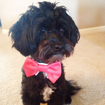 Coral and Dark Teal Satin Bow Tie for your dog