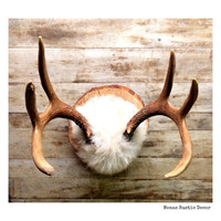 Taxidermied Wall Mount, Rare Large Jackalope Wall Mount, Taxidermy, Hunting, Antler, For Him,  Man Cave, Handcrafted