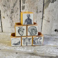 1 Reclaimed Wood Cobblestone Candle Block with Medical Decoupage No. 2