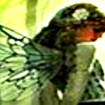Angel Reading1 Card Metaphysics New Age Oracle Spiritual Guidance Intuitive Metaphysical