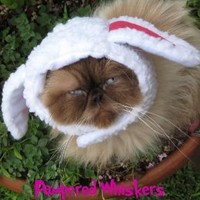 """The Sheepish One sheep costume hat for dogs and cats (x-small (6-10"""" collar))"""