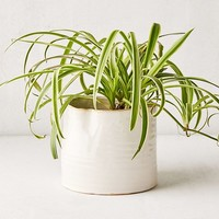 Bower Ceramic Ridge Planter | Urban Outfitters