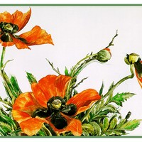 Orange Poppy Flowers Still Life by American Artist Charles Demuth Counted Cross Stitch Pattern