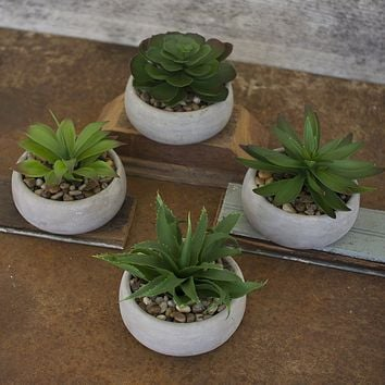 Artificial Succulents In Low Round Cement Pots (Set of 4)