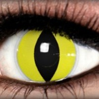 Yellow Cat Theatrical Contact Lens by ExtremeSFX