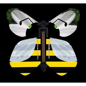 Bumble Bee Flying Butterfly