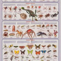 Arthropods Animal Education Poster 24x36