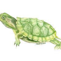 Turtle Watercolor Painting Print - 8 x 10 - Giclee Fine Art - 8.5 x 11 - Wall Art