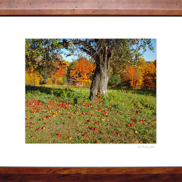 Apples on the ground, Autumn foliage, near Penwood Park, Bloomfield, CT, 8x10 print in signed 11x14 mat