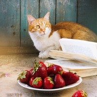 Cat with strawberry vertical Instant Digital Download Art Photography Printable, animal photo for pets lovers, cute summer ginger cat