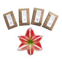 Scented Candle Sachets 4 in Sandalwood Noel Drawer Sachets - DIY Christmas Party Favors - Modern Rustic Wedding - Kraft Brown Red Amaryllis
