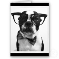 B&W Hipster Nerd Boston Terrier Cards from Zazzle.com