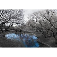 Central Park in Black and White with Blue Pond, Photography Poster Print, 24 by 36-Inch
