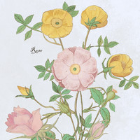 Roses in the pink by anipani