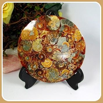 Ammonite Fossil Disk