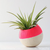 Neon Pink Air Plant Pot with Air Plant