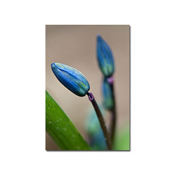 Wild Flower Blue Floral Photography Print Nature Wall decor Art Magnetic Calendar Greeting Card