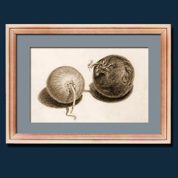 FRAMED print of original pencil drawning onions vegetables still life kitchen