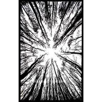 Black  White Locust Trees From Below Tapestry on RoyalFurnish.com