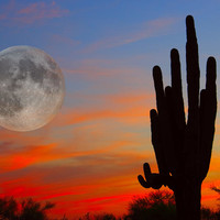 Saguaro Full Moon Sunset
