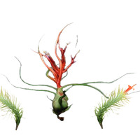 The Small Ones Airplants-3