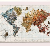 """""""Butterfly Migration"""" wall map"""