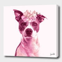 «Lola» Canvas Print by Suzanne Carter - Numbered Edition from $59   Curioos