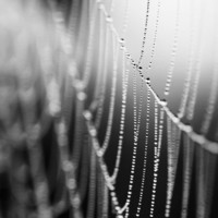 Halloween Spider Web Black and White Dew Drops Photo 8 x 10 spooky scary freaky goth macabre