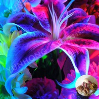 New Arrival!2pcs / Bag Rare Blue Lily Bulb, Not Lily Plants, It Is Bulb, Bonsai Lily Bulb, Pleasant Fragrance, Home And Garden