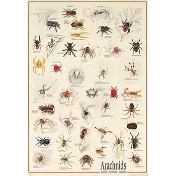 Spiders Arachnids Insect Poster 27x39